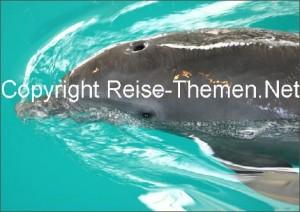 clearwatermarineaquariumdelfin1copyrightraabko_470
