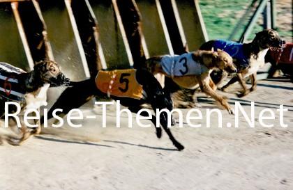Windhunderennen Copyright Karsten-Thilo Raab