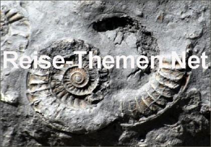 fossilienfunde2copyrightkarstenthiloraabkopie_470