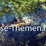 Everglades – grüne Legende im Süden Floridas
