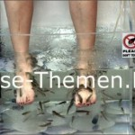 Knabbermassage im Aquarium