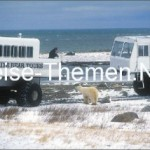 Eisbären-Begegnung im Tundra Buggy