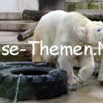 Zoo Karlsruhe – eine Rüssellänge vom Zentrum entfernt
