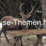 Der König der Wälder bittet zu Tisch