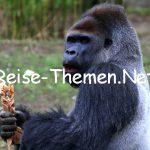 Tierisches Jubiläum – 80 Jahre Krefelder Zoo